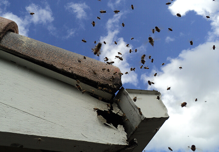 Bee and Wasp Removal Services