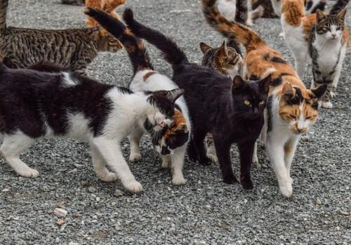 Cat Control