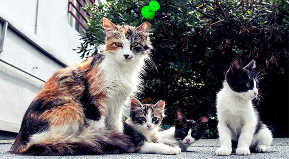 Florida Feral Cat Removal Services