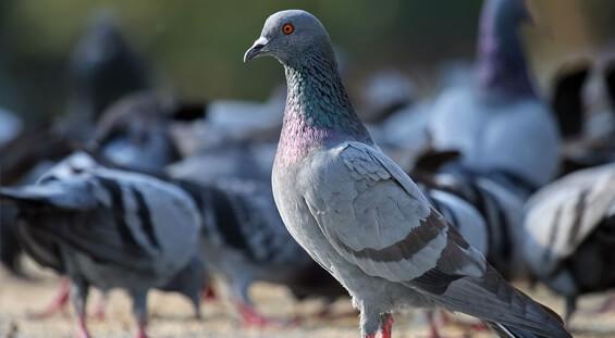 Florida bird removal