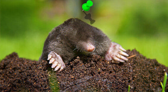Florida Mole Removal Services