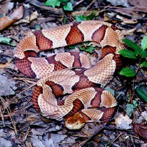 Florida Snake Control