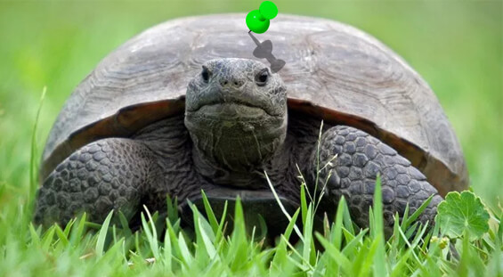 Florida Turtle Removal Services