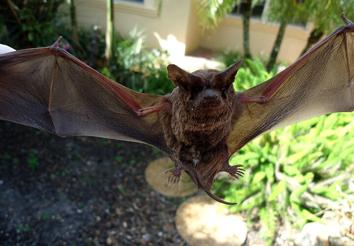 Charlotte County Bat Removal