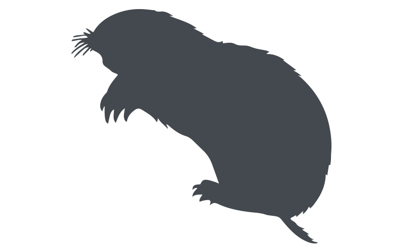 Florida Mole Pest Control