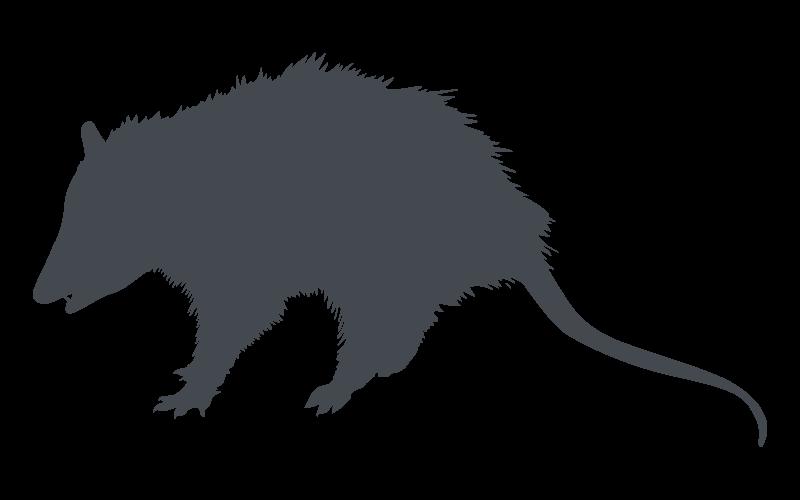 Florida Opossum Pest Control