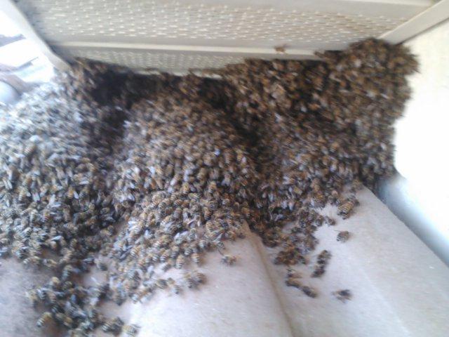 Sarasota Bee Control